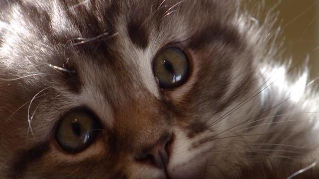 Des chats qui ne font pas éternuer