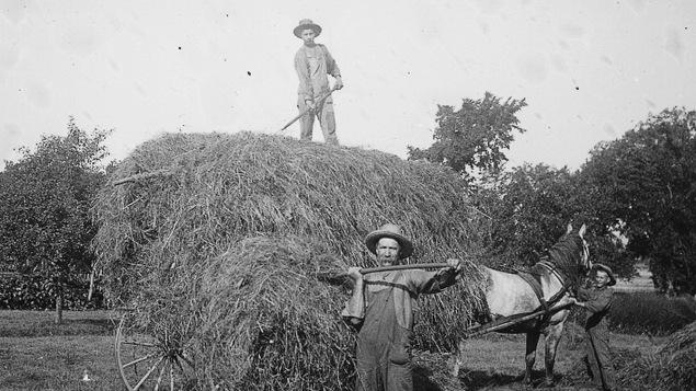 Chargement du foin dans une charrette, vers 1895