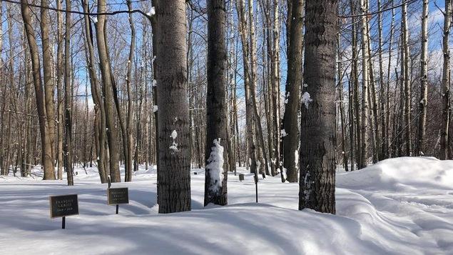 Un cimetière écologique à Sherbrooke