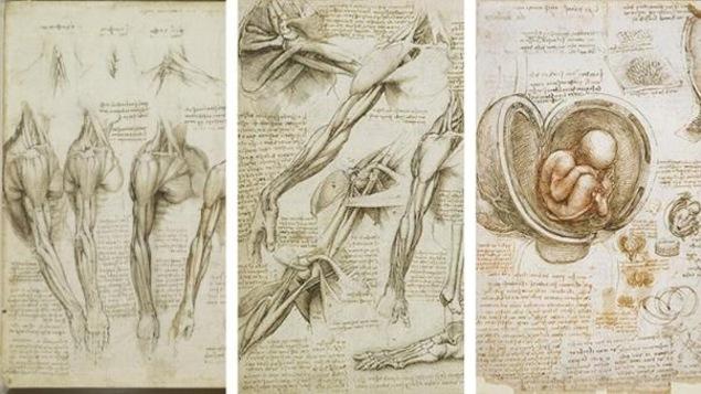 Collage de trois dessins d'époque représentant l'anatomie des bras, des jambes et du fœtus
