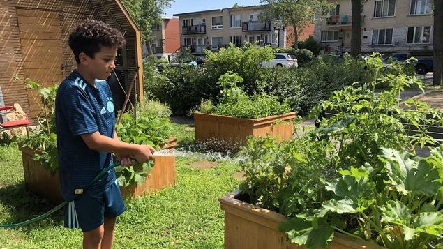 Un jeune garçon arrose un bac à plantes.