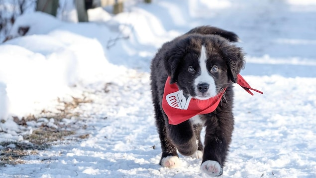 Un chien de la Fondation Mira