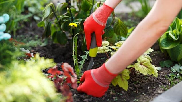 Une femme prend soin de son jardin.