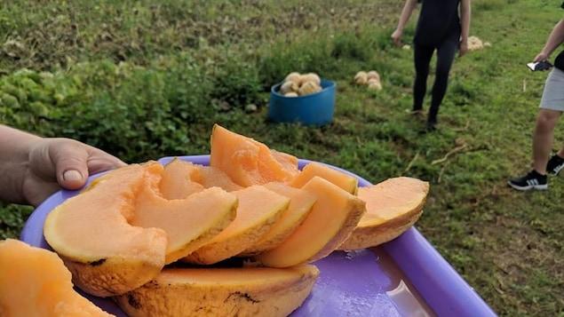Le melon d'Oka est un des produits mis en valeur par l'opération Gardiens de semences.