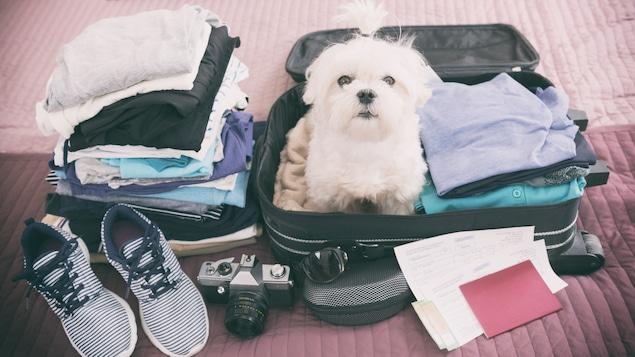 Dans 84 % des cas, ce sont les chiens qui accompagnent les voyageurs.