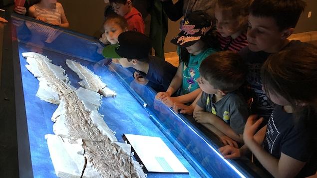 Les élèves regardent attentivement le grand fossile