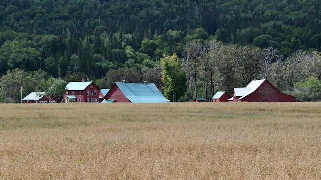 Les bâtiments rouges au toit vert avec un champ à l'avant-plan