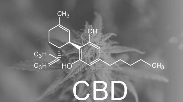 La molécue du CBD est dessinée en avant plan. En arrière plan, la silouhette d'un plan de cannabis.