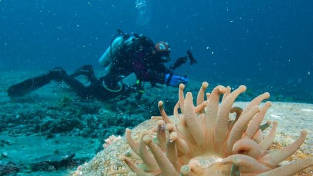 Chronique sous-marine avec le vidéaste Mario Cyr:Les aires protégées