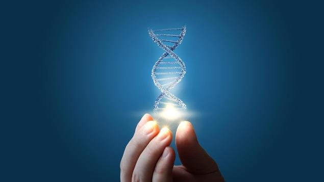 Ilustraton de l'ADN au bout des doigts.