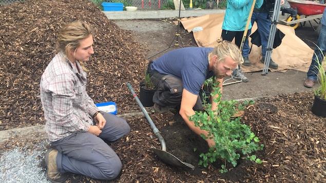Un homme qui plante un arbuste sous le regard d'une femme.