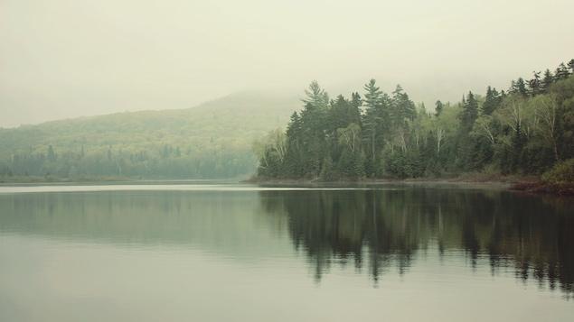 Vue d'un lac et d'un rivage forestier, avec une brume très présente.