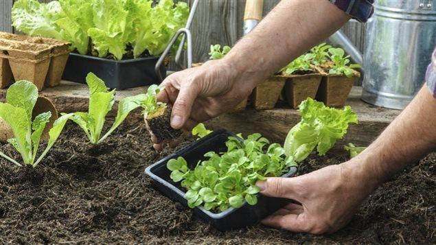 Plantation d'un jardin