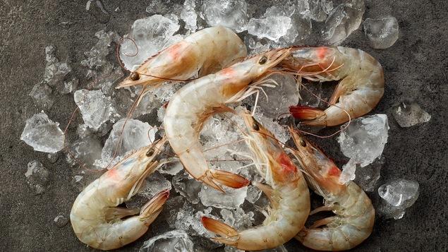 Les crevettes fraîches sont un leurre puisqu'elles sont congelées en premier lieu, selon Lesley Chesterman.