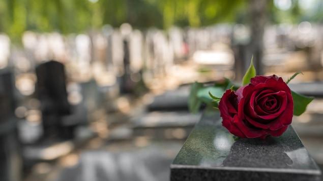 Une rose rouge posée sur une pierre tombale dans un cimetière.