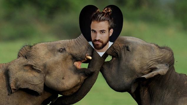 Jay du Temple, animateur d'Occupation Double, dans une vignette en forme de coeur sur un fond d'éléphants qui s'embrassent.