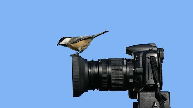 Un petit oiseau se pose sur la lentille d'un appareil photo, sur fond bleu.