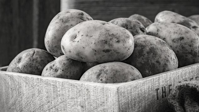 Un cageot de pommes de terre