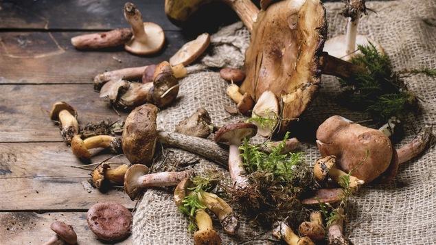 Une sélection de champignons sauvages cueillis lors d'une promenade en forêt