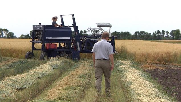 Des agriculteurs dans un champ.