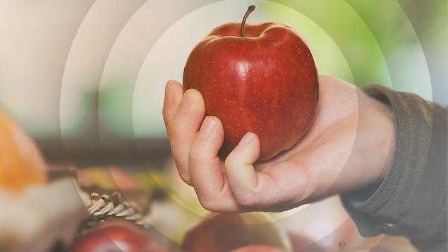 Il y a toujours des pommes chez Stéphanouille.