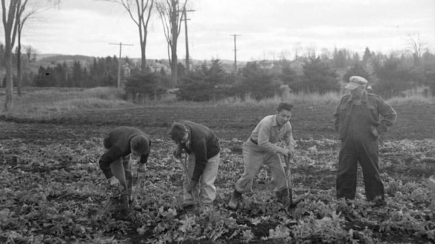 Des hommes travaillent dans les champs.