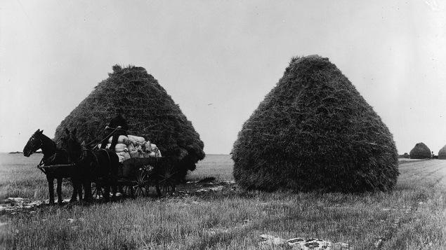 Meules de blé et charrette chargée de céréales, Portage La Prairie, Manitoba, 1887