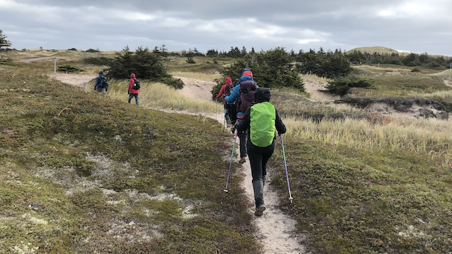 Des marcheurs de dos dans un paysage dunaire avec des conifères