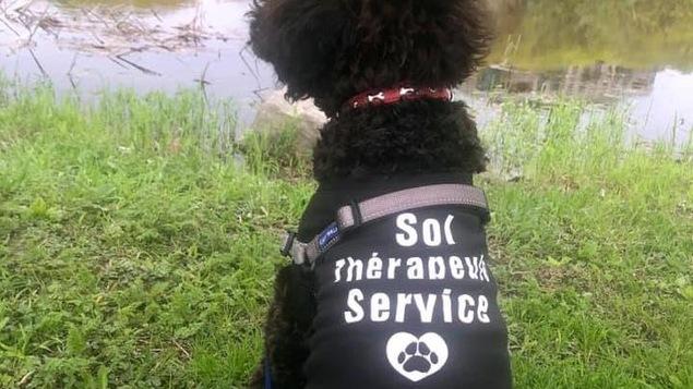 Le chien, vêtu d'un dossard « thérapeute en service », nous fait dos.