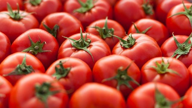 Tomates rouges et mûres