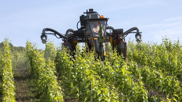 Un tracteur étend des pesticides dans les vignes