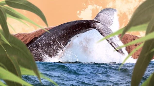 Une baleine qui sort de l'eau avec des feuilles et une montagne.