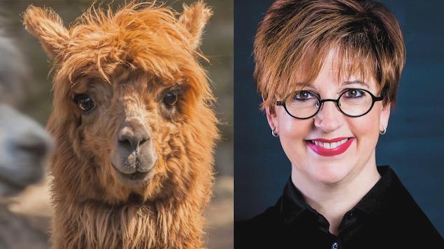 Sur le côté gauche de l'image, on retrouve une photo d'un alpaga. À droite, l'animatrice Chantal Lamarre est photographiée.