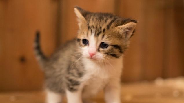 Un bébé chat sur un banc de bois.