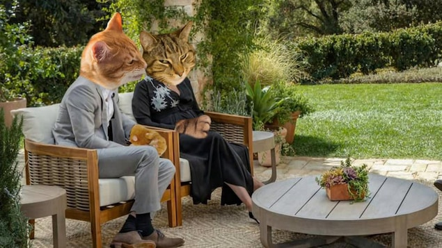 Deux chats en entrevue avec Oprah Winfrey.