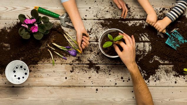 Vue en plongée : des mains d'enfants et d'adultes travaillent dans la terre. Nous apercevons également des fleurs.