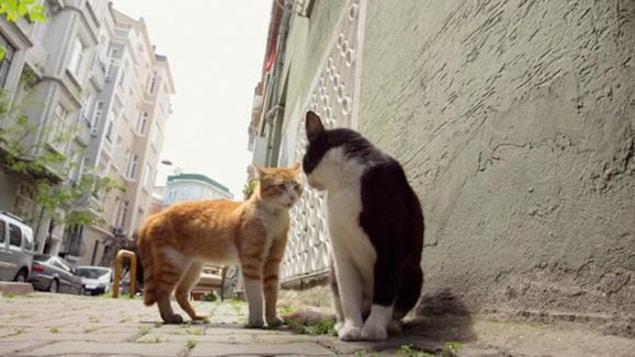 Un chat roux et un chat noir et blanc dans une rue pavée.