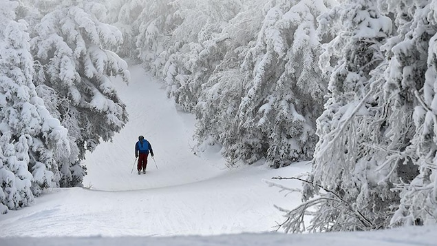 Un skieur seul sur une piste enneigée bordée d'arbres.
