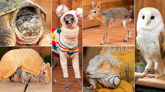 Mosaïque de photos : tortue, tatou, lévrier, mara de Patagonie, iguane, effraie des clochers.