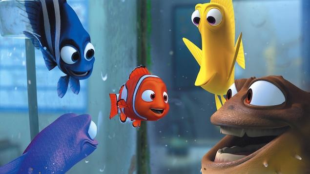 Nemo dans un aquarium avec d'autres poissons