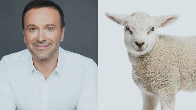Un montage photo de Joël Legendre et d'un agneau.