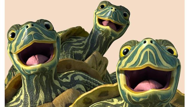 Les trois tortues font des grands sourires