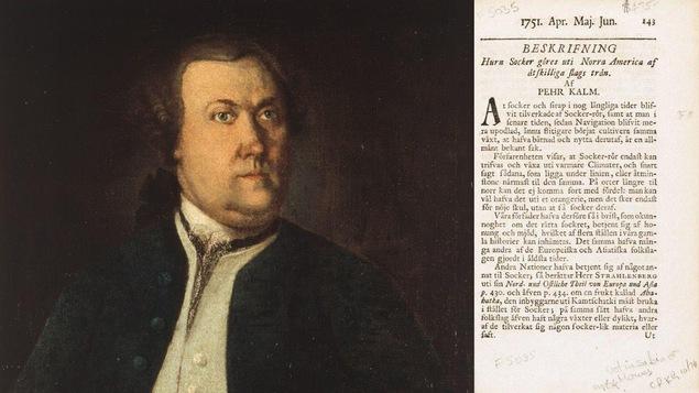 Le naturaliste suédois Pehr Kalm et une page de l'un de ses traités