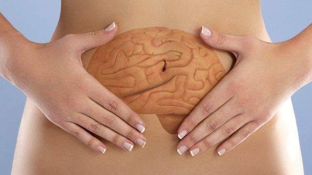 Les chercheurs appellent le microbiote, « nouvel organe » ou encore « deuxième cerveau ».