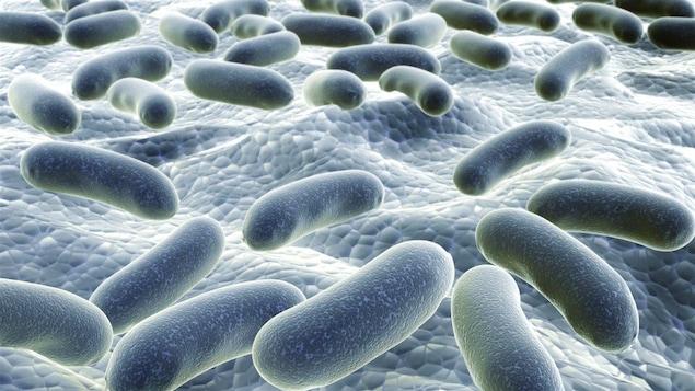 Les scientifiques comprennent de mieux en mieux le rôle de la flore intestinale.