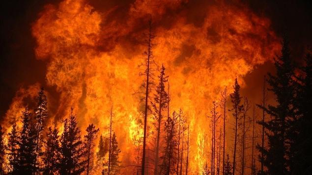 Une forêt flambe suite à un incendie contrôlé allumé par Sustainable Resource Alberta en 2009.