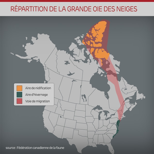 Carte de la migration de la grande oie des neiges