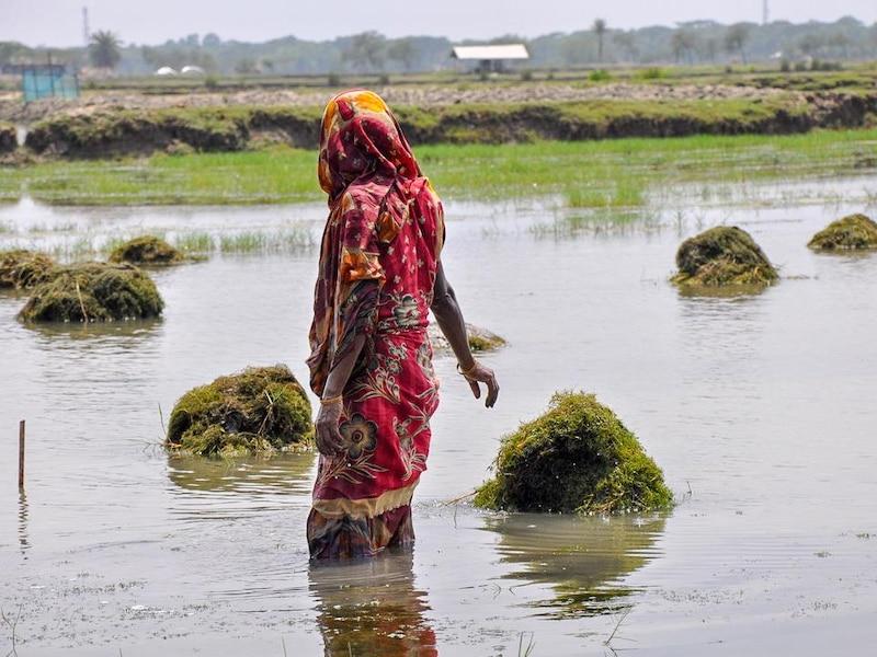 Une femme se tient debout dans un bassin de crevettes. Elle nettoie l'étendue d'eau.