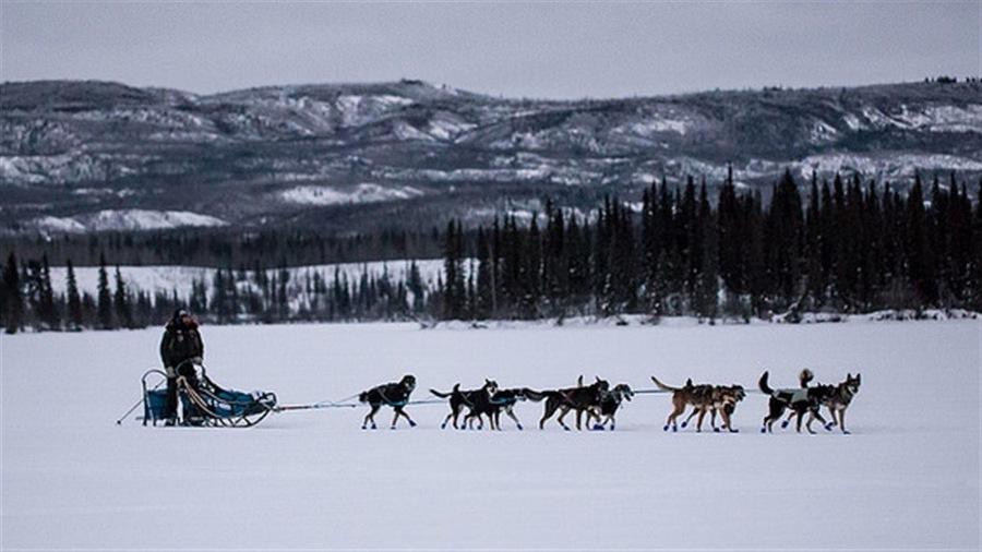 Un meneur de traîneaux à la Yukon Quest 2016