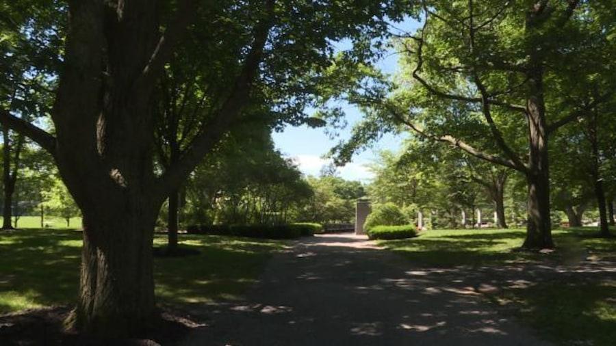 De gros arbres sur le sentier